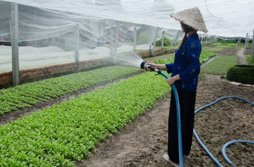 the cultivation service vegetables care
