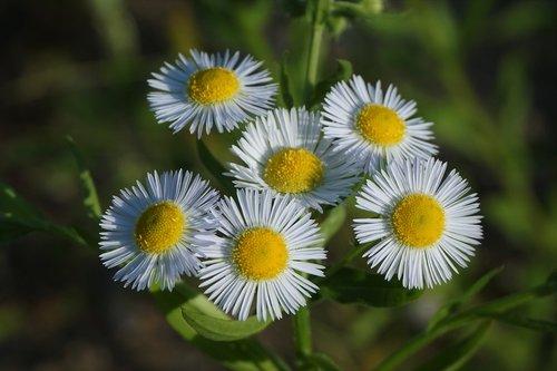 the dog died first  wildflower  white flower