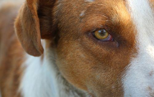 the dog's eyes red dog dog