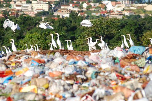 the dump environment society
