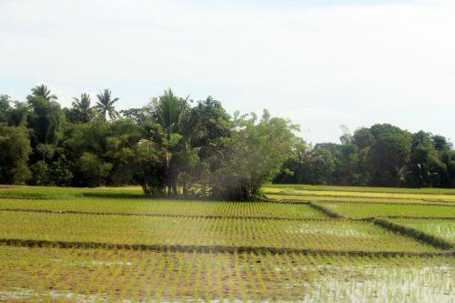 ūkis, žemės ūkio paskirties žemė, medžiai, mažas & nbsp, namas, debesys, žalias & nbsp, fonas, žalias, fonas, kalnas, gamta, žalia žolė, žalias & nbsp, gyvenimas, dangus, ūkis 5