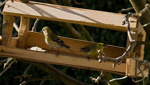 the feeder bell green bird