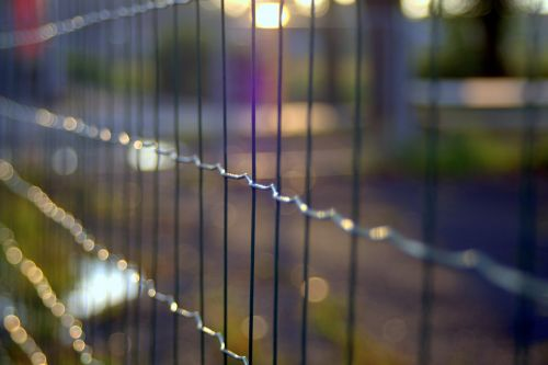 the fence trellis wire