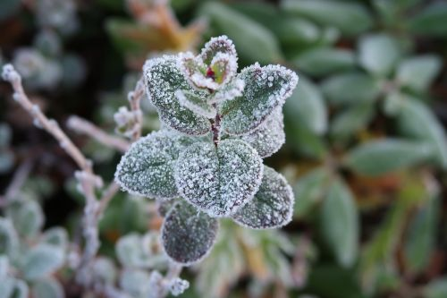 the first frost early autumn indian summer