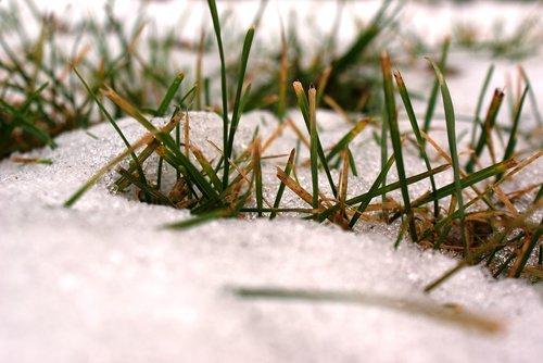the first snow  freezing  autumn