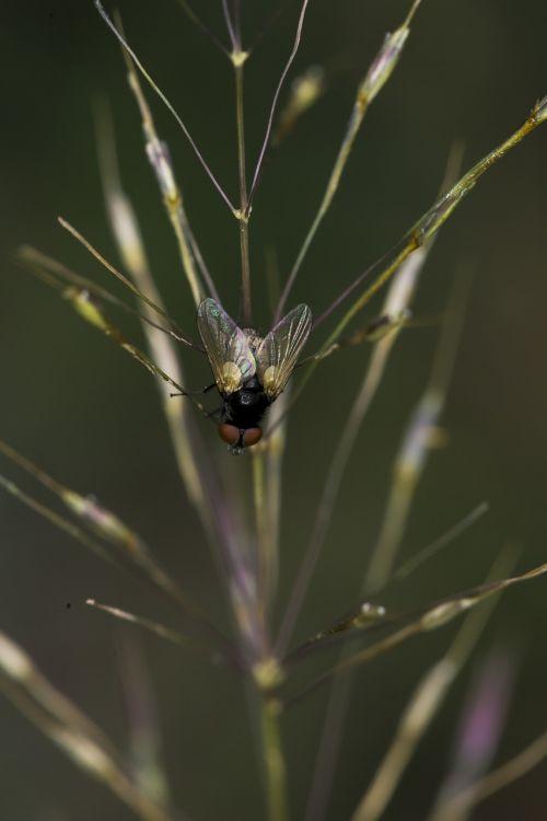 the flies neck con
