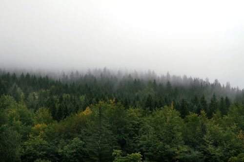 the fog forest mountains