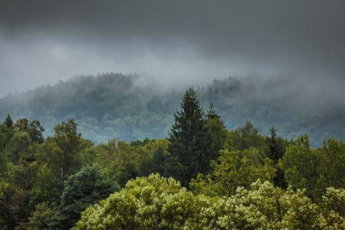 rūkas,para,lietus,miškas,medis,lapija,lapai,kalnas,kalnai,viršuje,kraštovaizdis,po lietaus,liūdnas,pilka,tamsi