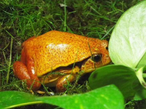 the frog zoo amphibians