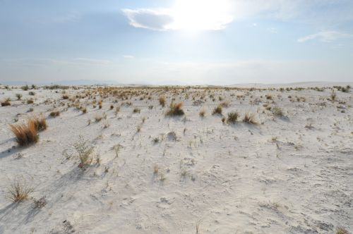 The Grass Of White Sands 3