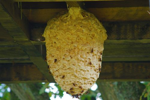 the hive wasps nest