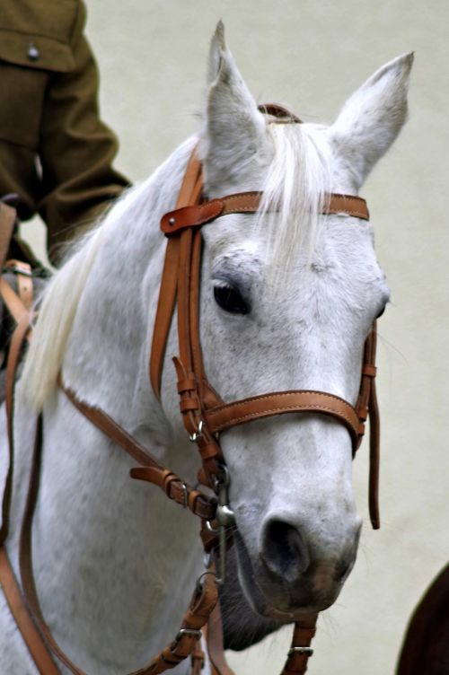 the horse cavalryman soldier