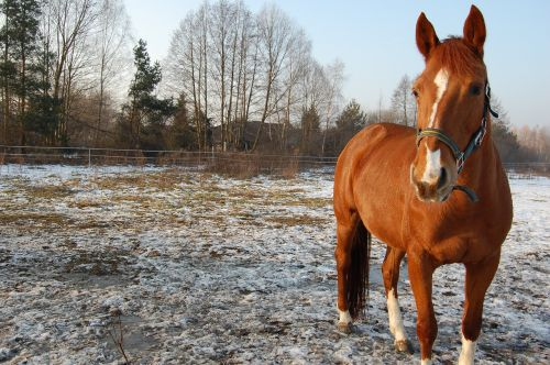 the horse winter pasture land