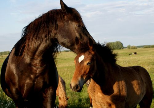 the horse offspring nature