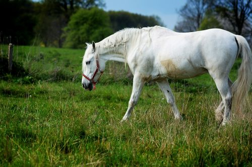the horse gray is