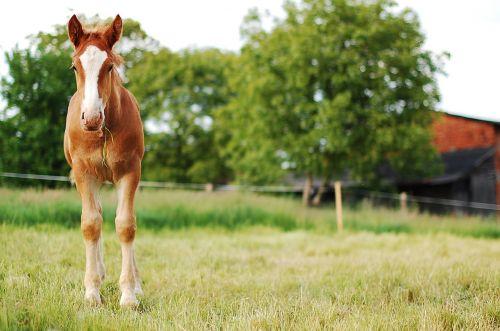 the horse offspring village