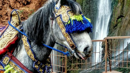 the horse folklore exotica