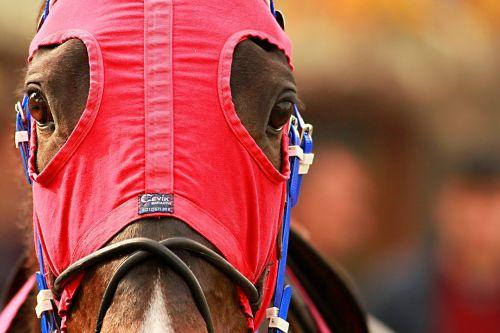 the horses are race horse jockey