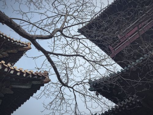 the leaves,ancient architecture,sky