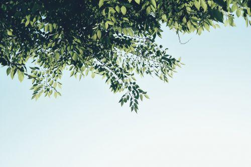 lapai,pavasaris,vasara,žalias,abstraktus,mediena,gamta,augalai,lapai