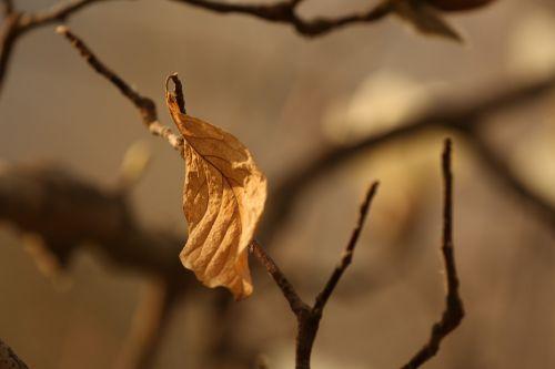 the leaves shriveled nostalgia
