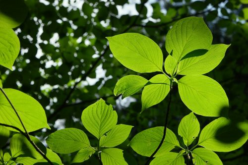 the leaves,green,summer,greenness,nature,plants