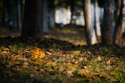 the leaves defoliation sunshine