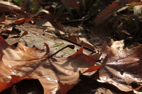 the leaves ground twilight