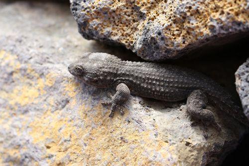 the lizard gad skin