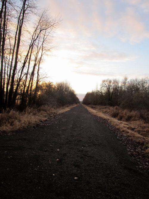 kelias, Šalis, juostos, purvas, medžiai, ilgas kelias