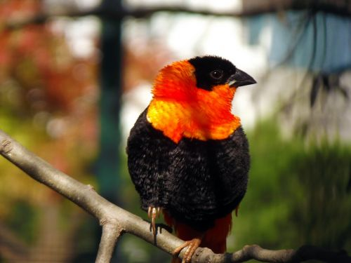 the loom bird orange under the loom