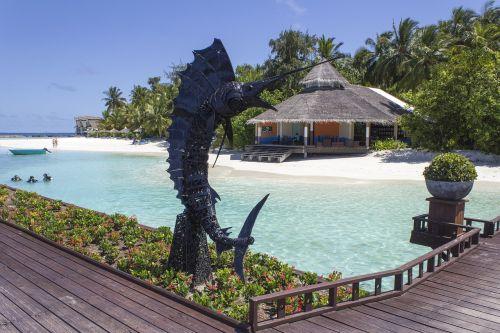 the maldives island swordfish