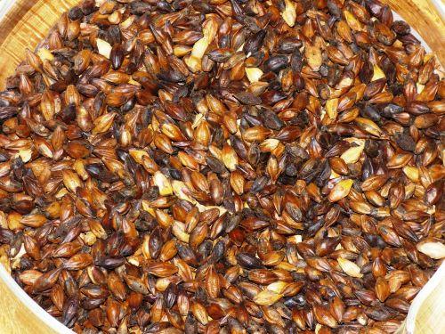 the malt wheat malt barley malt