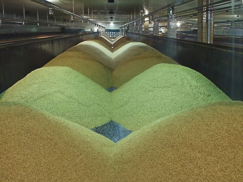 the malting process preparation raw materials
