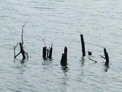 the mangroves water deadwood
