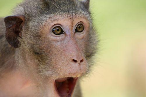 the monkey animal zoo