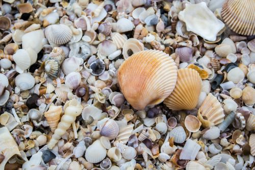 the mussels shell sea