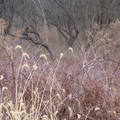 The Muted Colors Of Early Spring