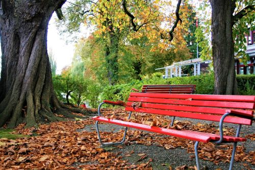 the old tree benches square