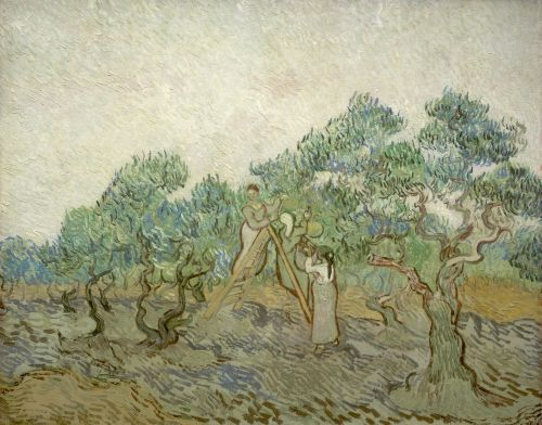 The Olive Orchard, 1889