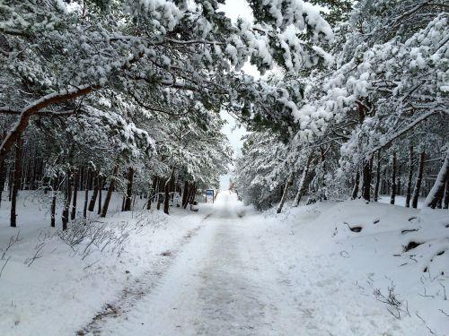 the path winter snow
