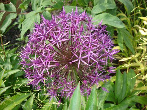 the plot flowers nature