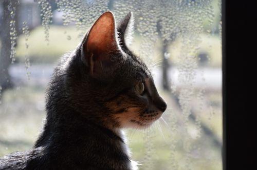 The Profile Of A Feline