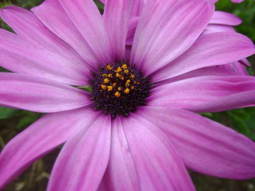 the purple flower flower purple