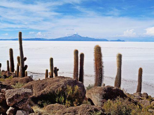 salar de uyuni,uyuni,druskos dykuma,kaktusai,Bolivija