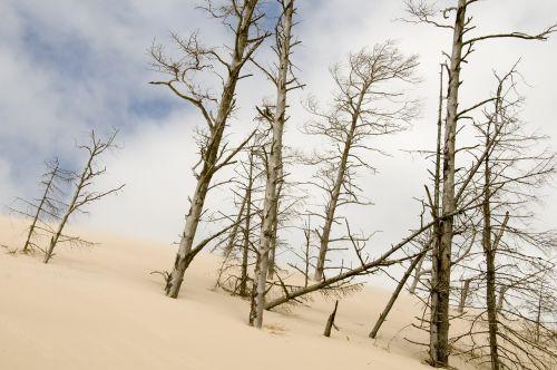 the sand dunes łeba holidays