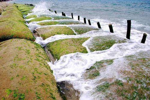 the sea dai hoi