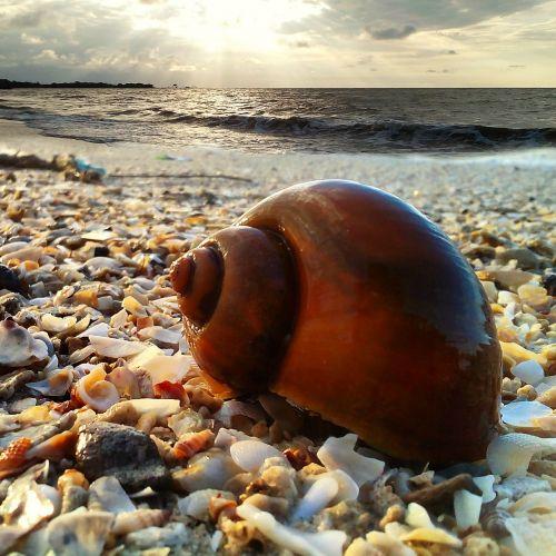 the sea beach sun