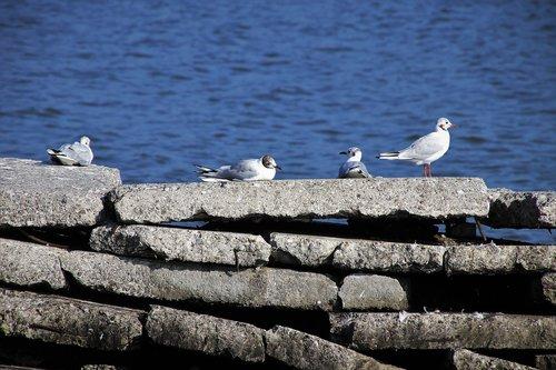 the seagulls  water  masonry