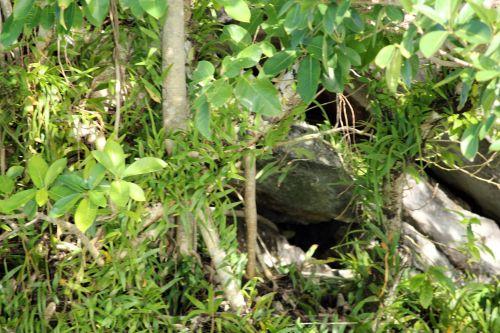 urvas, objektai, akmuo, augalai, medžiai, bagažinė, stiebas, lapai, slaptas urvas